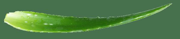 L'Altro Benessere aloe foglia sx